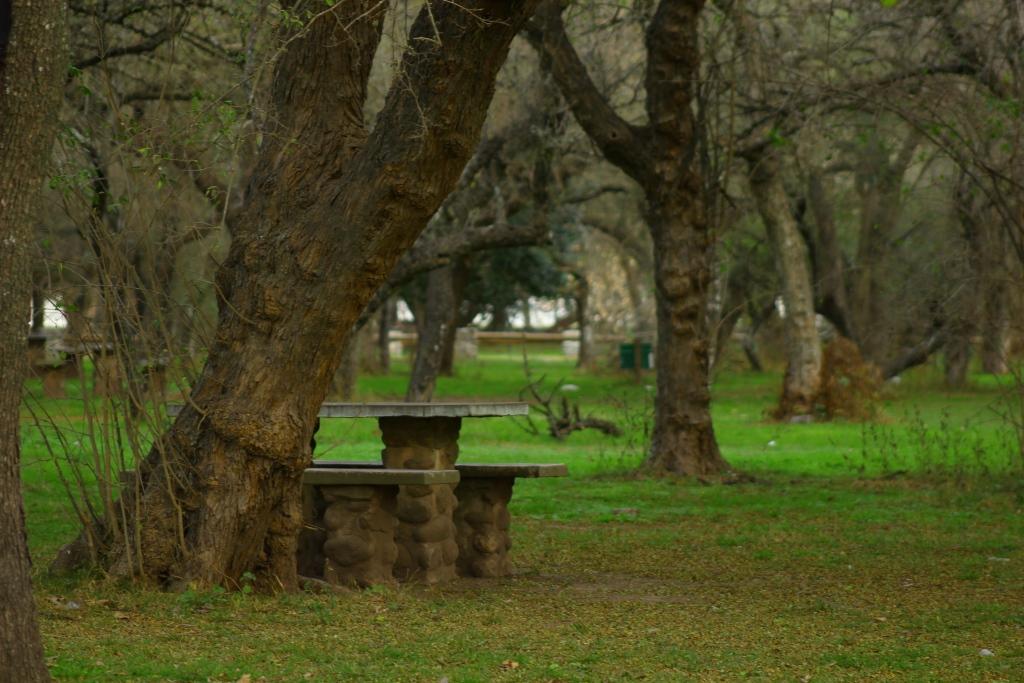 Parque Francisco Tau - Arboleda y Mesa